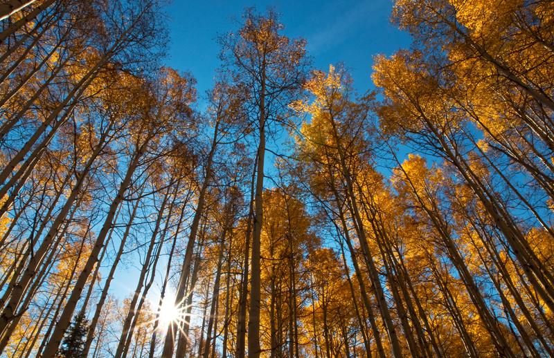 Fall Sunburst. Near Crested Butte, Colorado, 2012