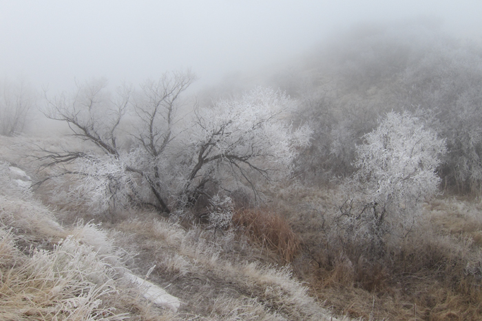 Ice and Fog #1. Joder Arabian Ranch, 2011
