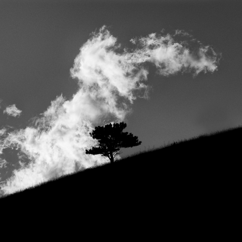 Tree and Cloud. Joder Arabian Ranch, Colorado, 2013