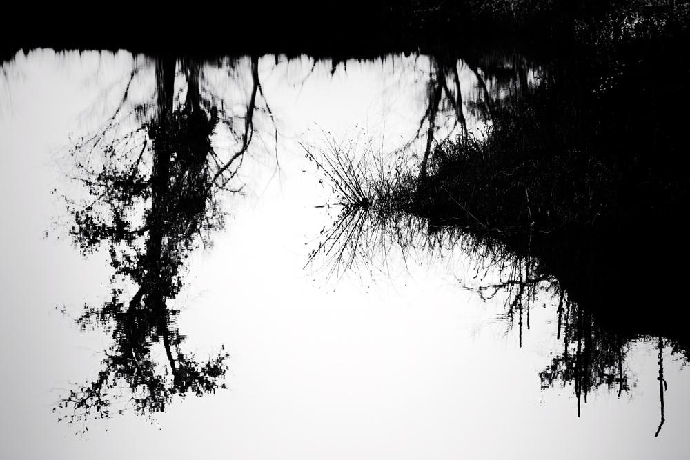 Sawhill Reflection #10. Boulder, Colorado, 2013