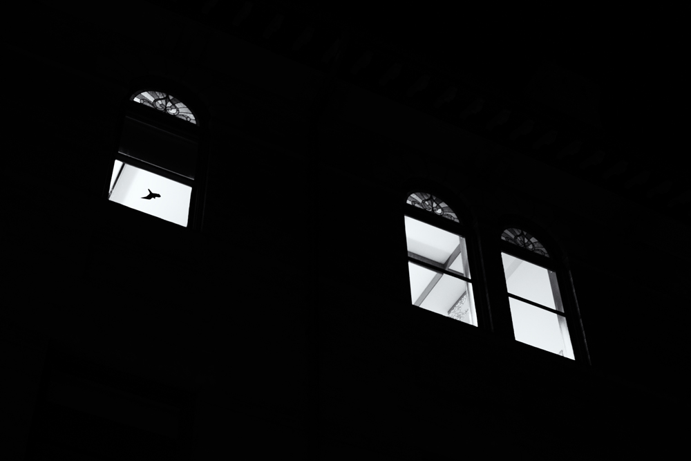 Dove and Three Windows #3. Boulder, Colorado, 2014 (with Nikon D90)