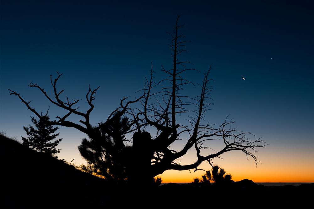 Crescent Moon, Venus, and Old Tree. Sugarloaf Mountain, Colorado, 2014