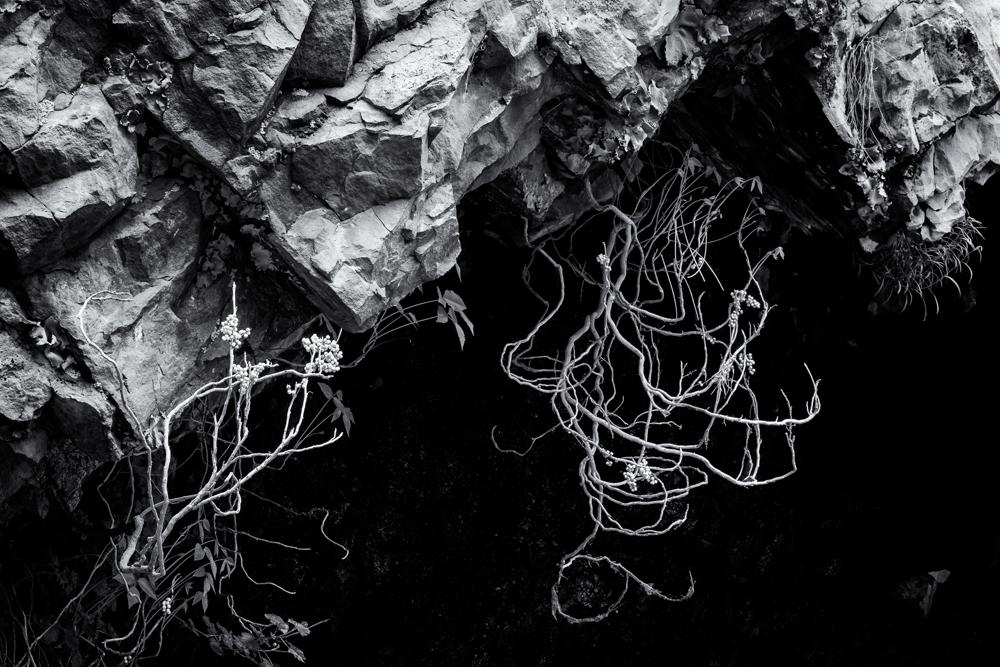 Lonely Plants. Eldorado Springs Canyon, Colorado, 2014