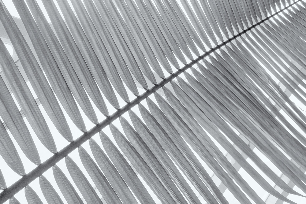 Palm, #7. Denver Botanic Gardens, Colorado, 2014