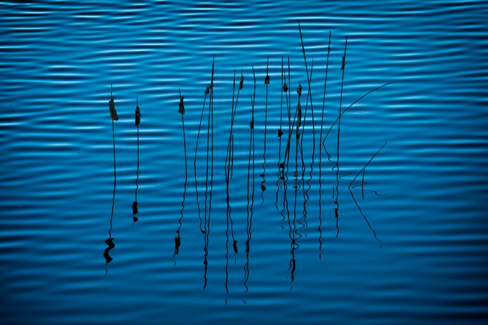 Sawhill Line Study, #1. Sawhill Ponds, Boulder, County, Colorado, 2014