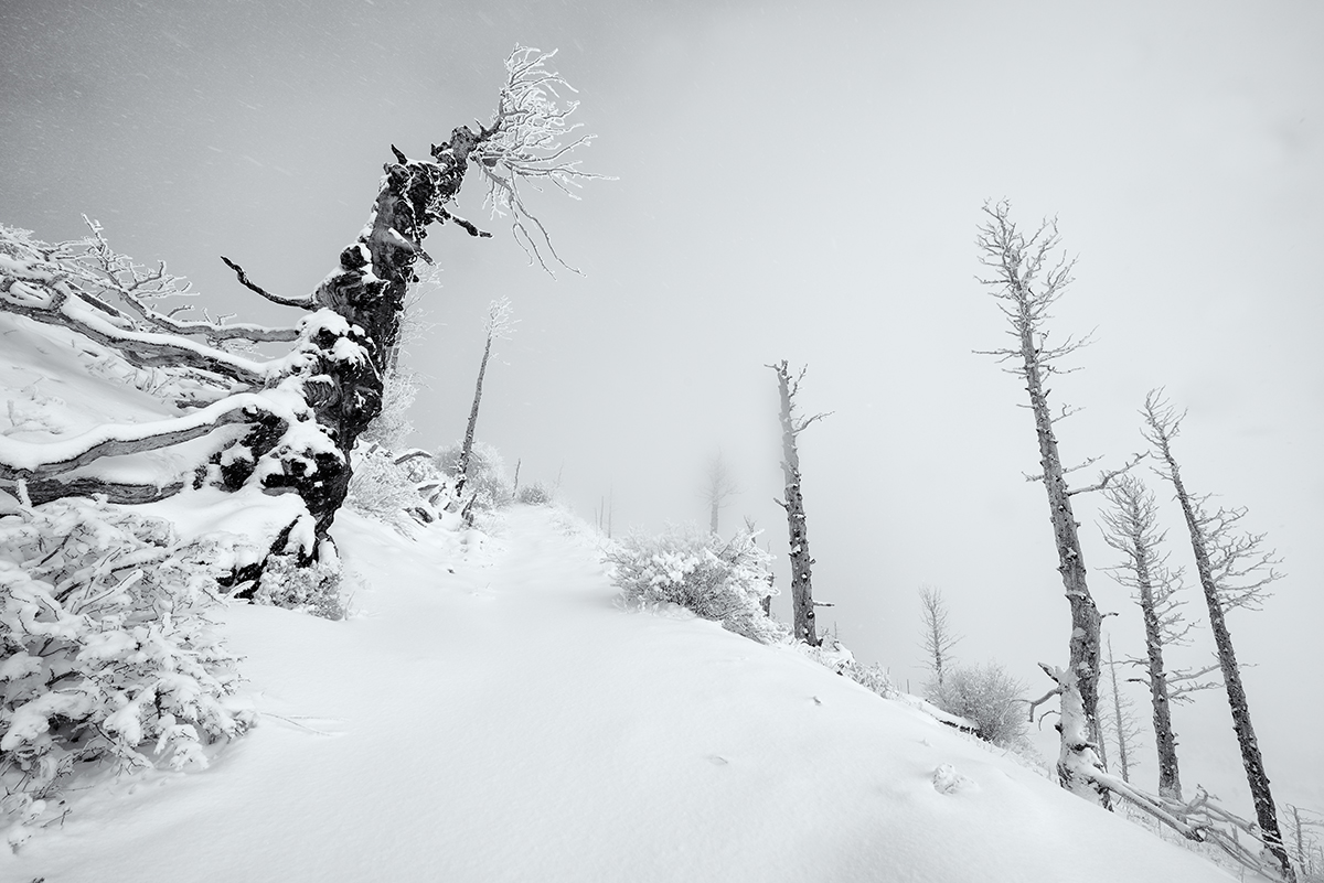 The Snag Forest. Sugarloaf Mountain, Colorado, 2014
