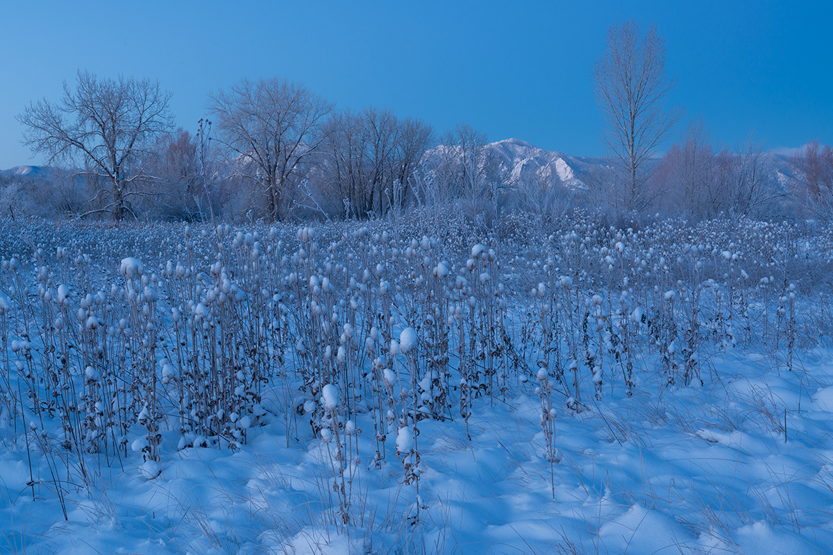 Cold Morning Blue, #1. Sawhill Ponds, Boulder, Colorado, 2014