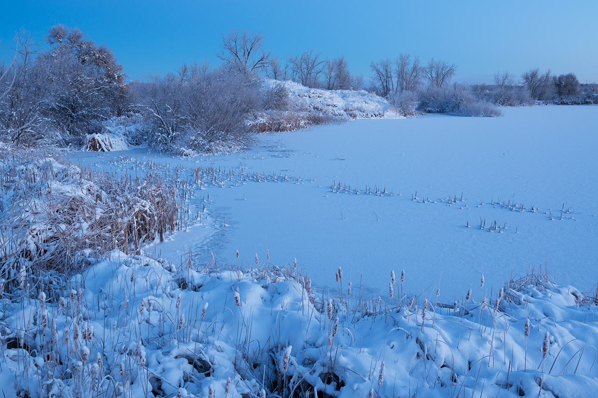 Cold Morning Blue, #2. Sawhill Ponds, Boulder, Colorado, 2014