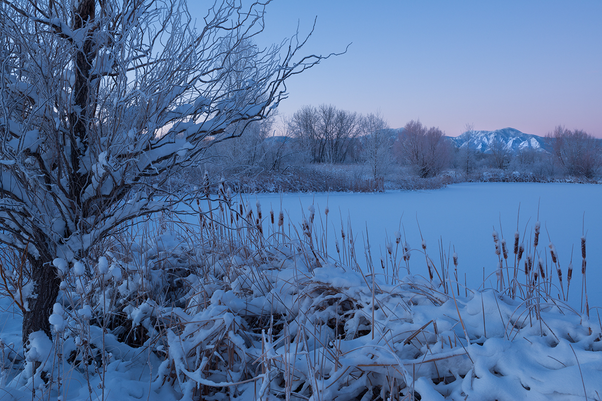 Cold Morning Blue, #5. Sawhill Ponds, Boulder, Colorado, 2014