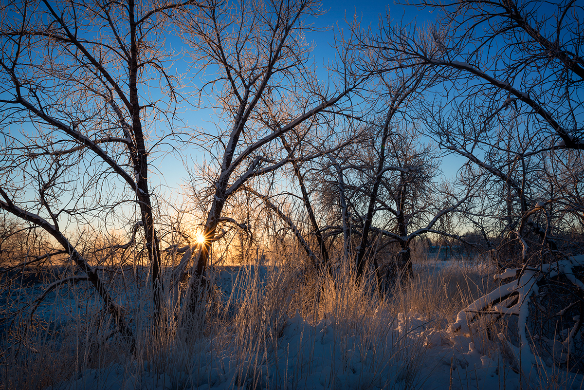 Winter Sunburst, #2. Sawhill Ponds, Boulder, Colorado, 2014