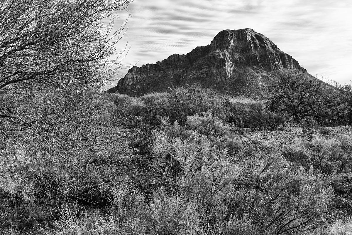 Cat Mountain Portrait. Tucson Mountains, Arizona, 2015