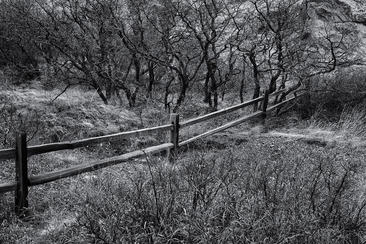 Fence and Oak. Garden of the Gods, Colorado, 2015