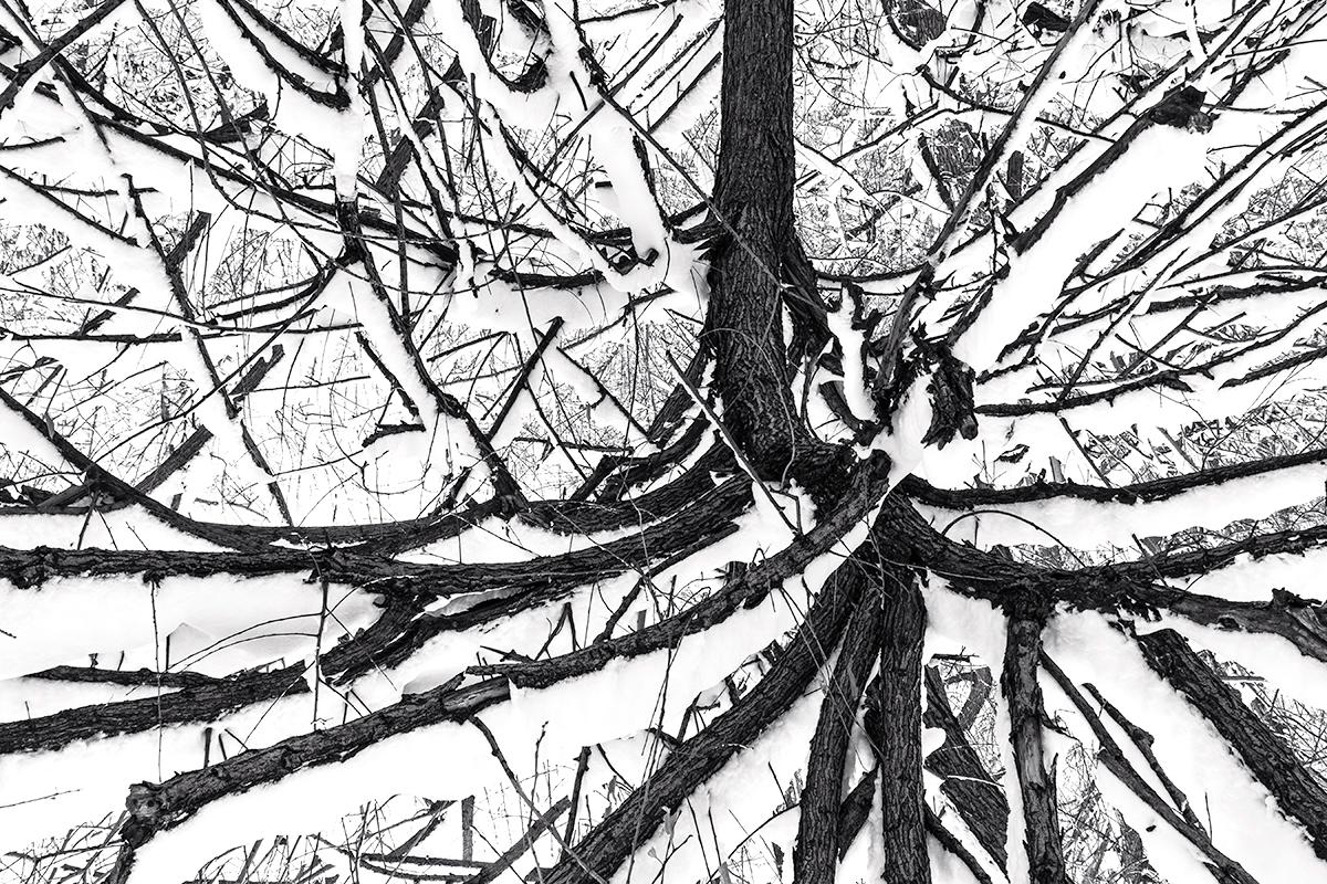 Strange Roots, Winter. Boulder Creek, Colorado, 2015