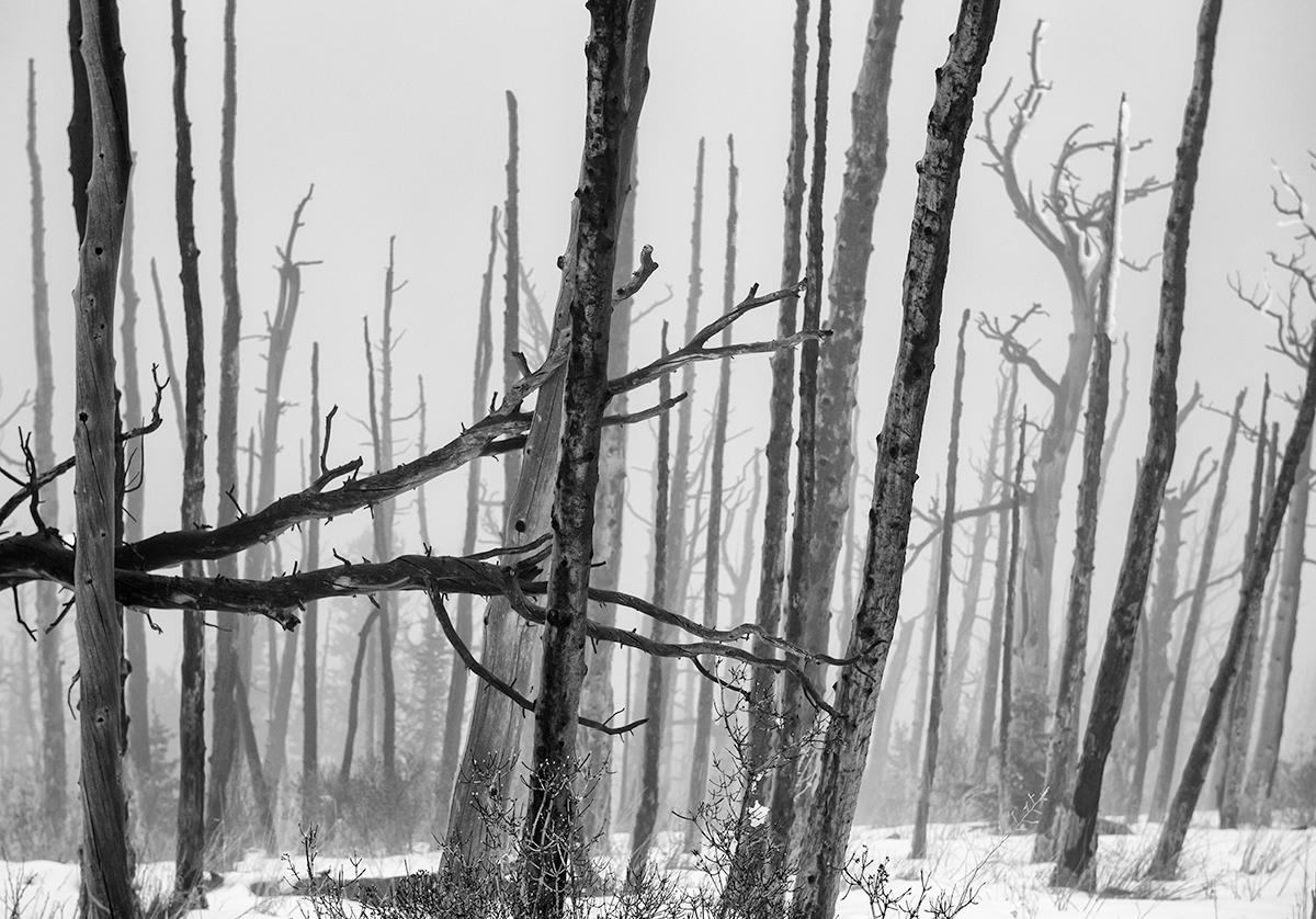 Sugarloaf Fog, #1. Sugarloaf Mountain, Colorado, 2015