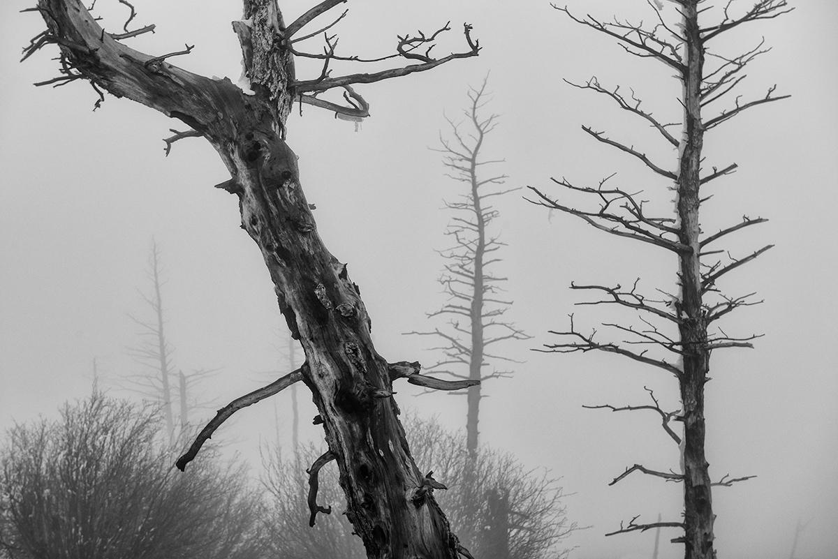 Sugarloaf Fog, #2. Sugarloaf Mountain, Colorado, 2015