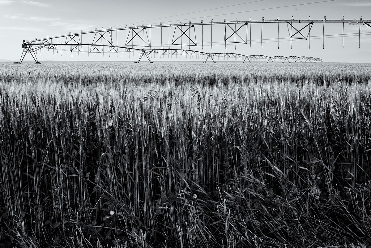 Wheat Field, #1. Colorado, 2015