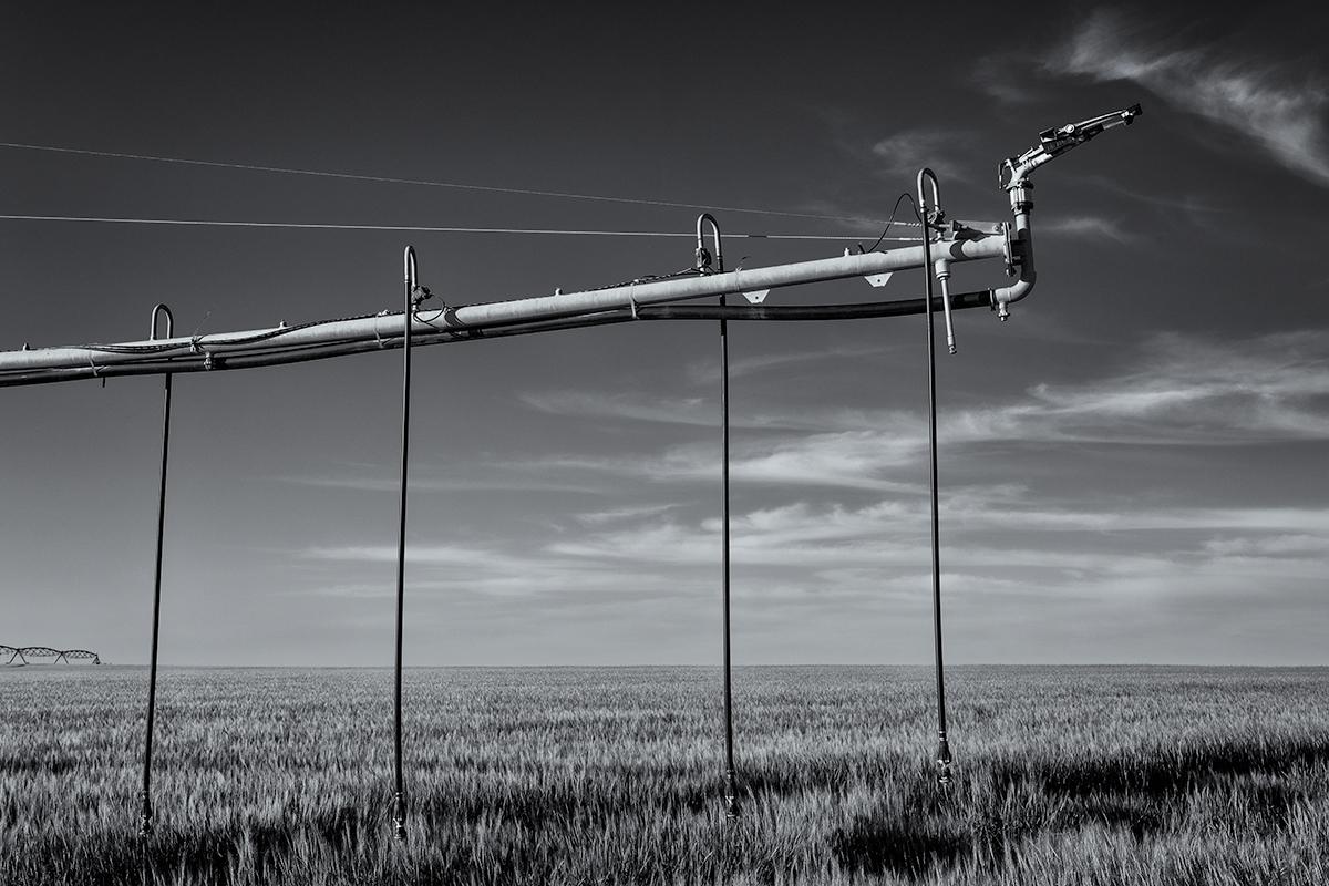 Wheat Field, #2. Colorado, 2015