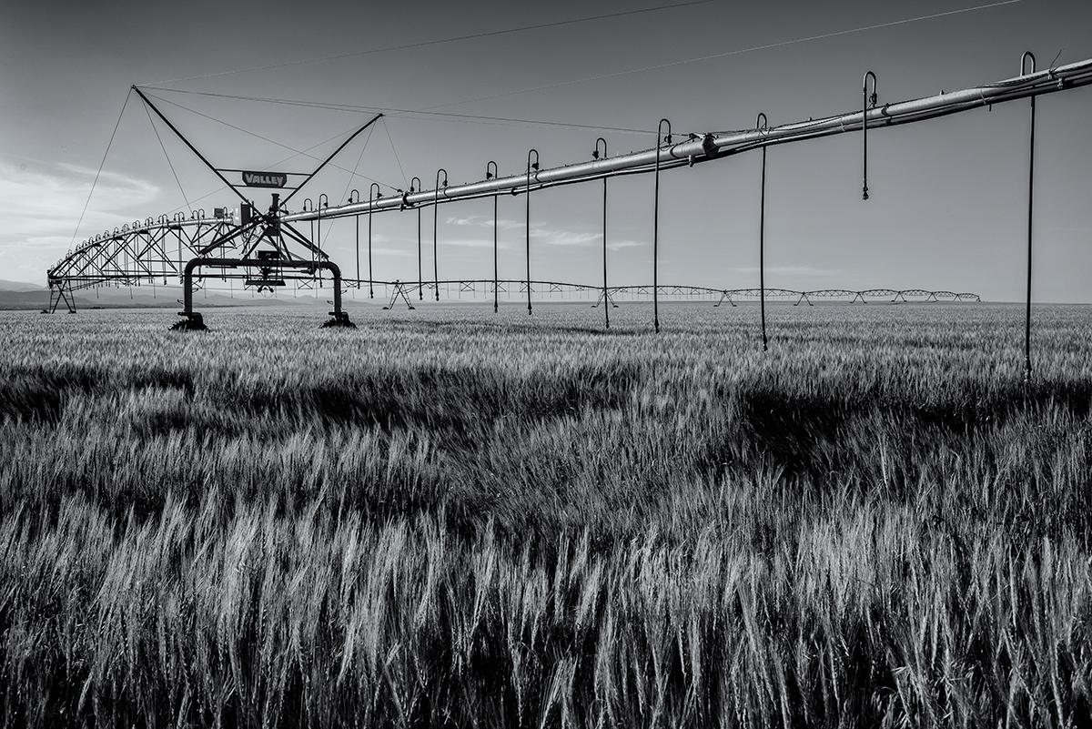 Wheat Field, #3. Colorado, 2015