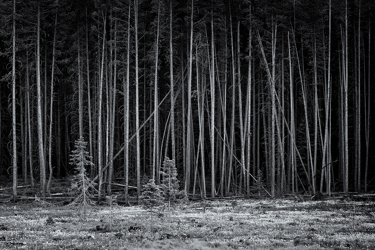 The Forest, #2. Tigiwon Road, Colorado, 2015