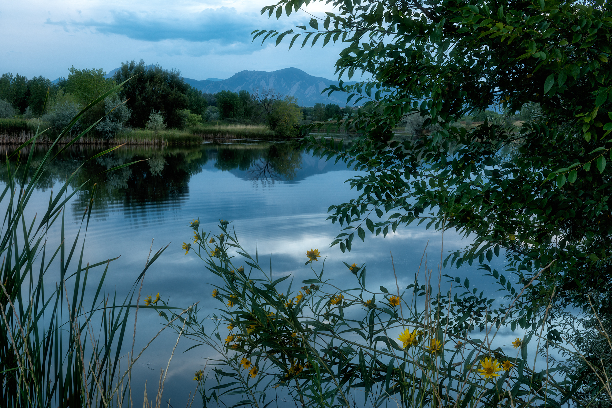 Sawhill Summer Evening. Sawhill Ponds, Boulder, Colorado, 2015