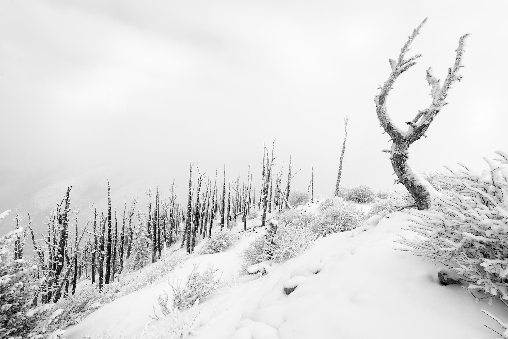 The Burn. Sugarloaf Mountain, Colorado, 2015