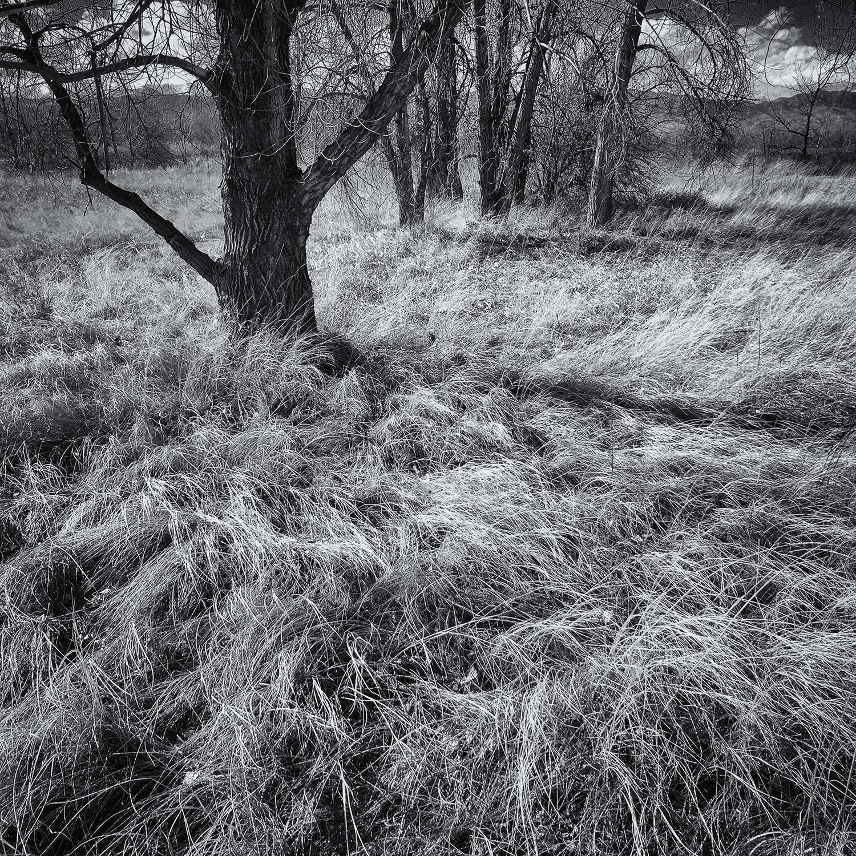 Sawhill Grass-scape. Sawhill Ponds, Colorado, 2016