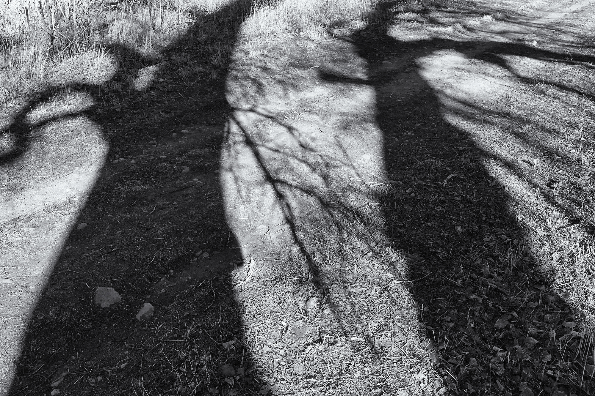 Cottonwood Shadows. Sawhill Ponds, Colorado, 2016
