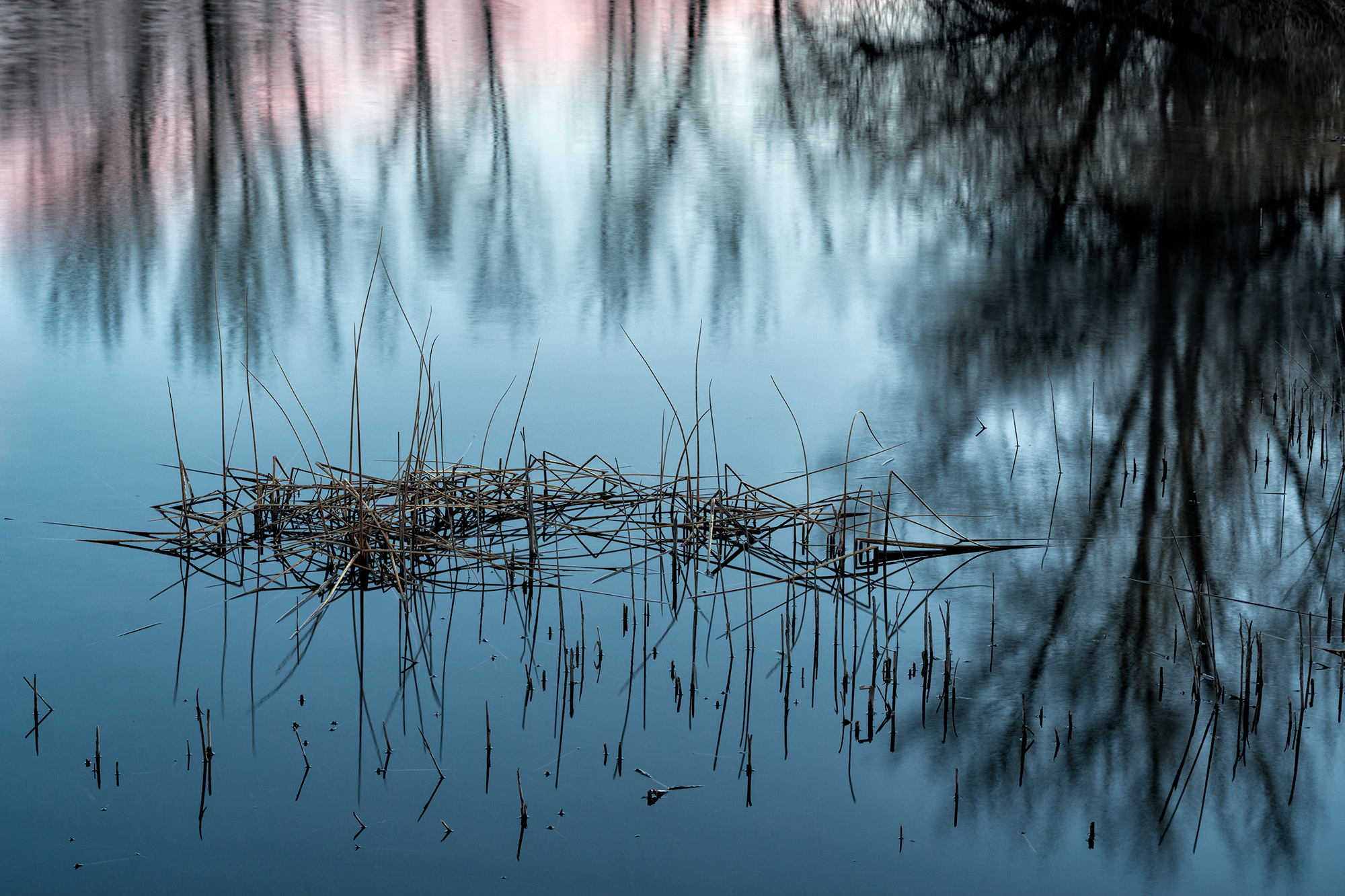 Pink at the Ponds, #3. Walden Ponds, Colorado, 2016