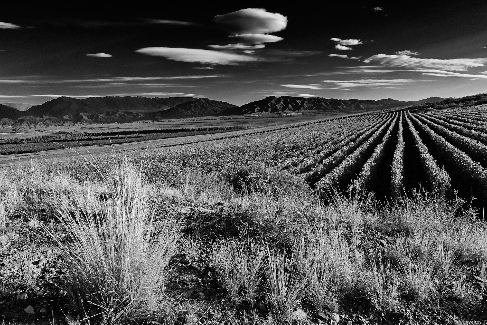 The Vineyards. Valle del Pedernal, San Juan, Argentina, 2016