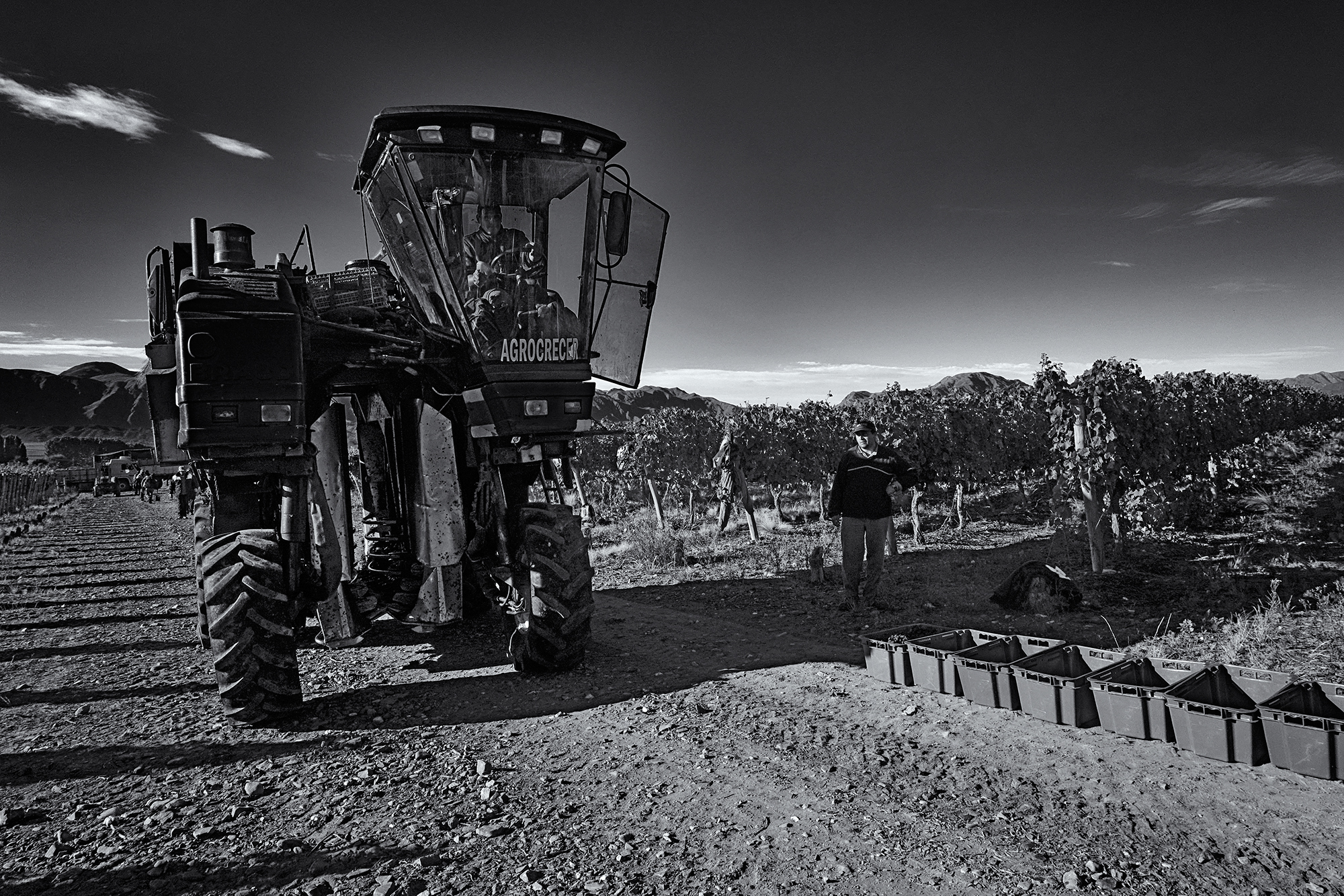 Grape Harvester. Valle del Pedernal, San Juan, Argentina, 2016