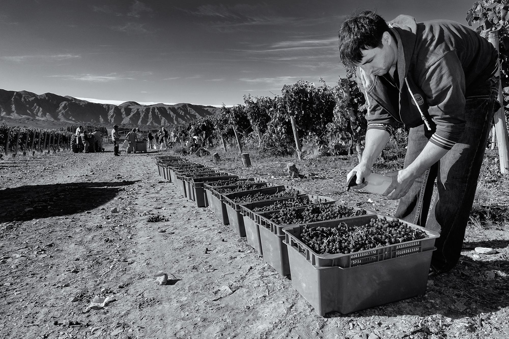 Disinfecting. El Valle del Pedernal, San Juan, Argentina, 2016