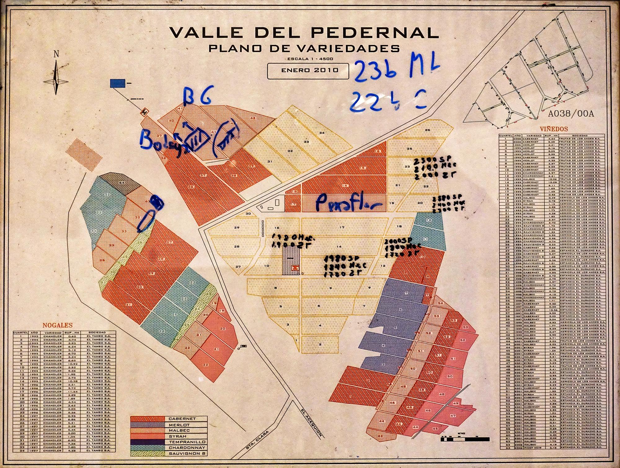 Plano de Variedades. El Valle del Pedernal, San Juan, Argentina, 2016