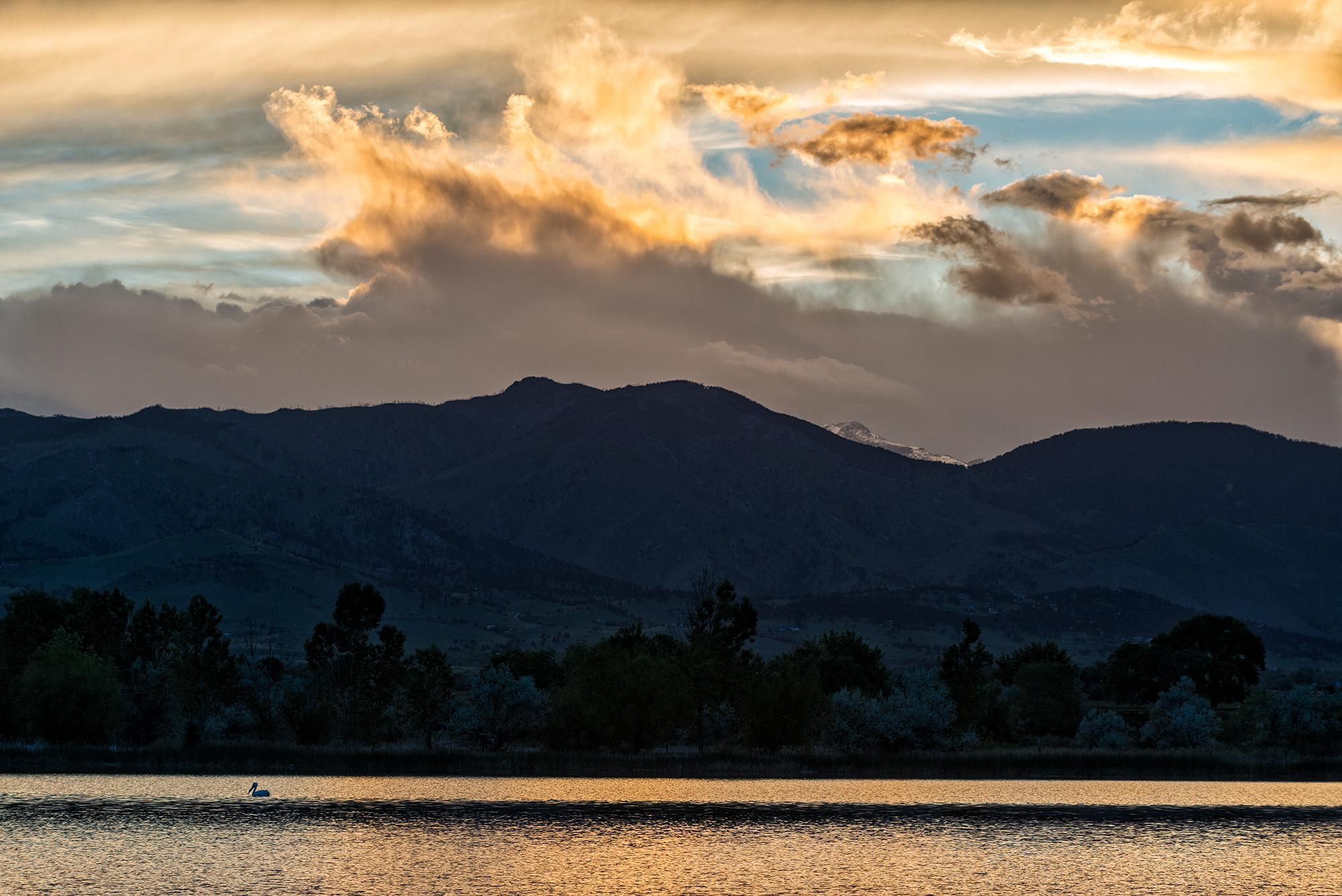 Crane on Coot Lake. Boulder County, Colorado, 2016