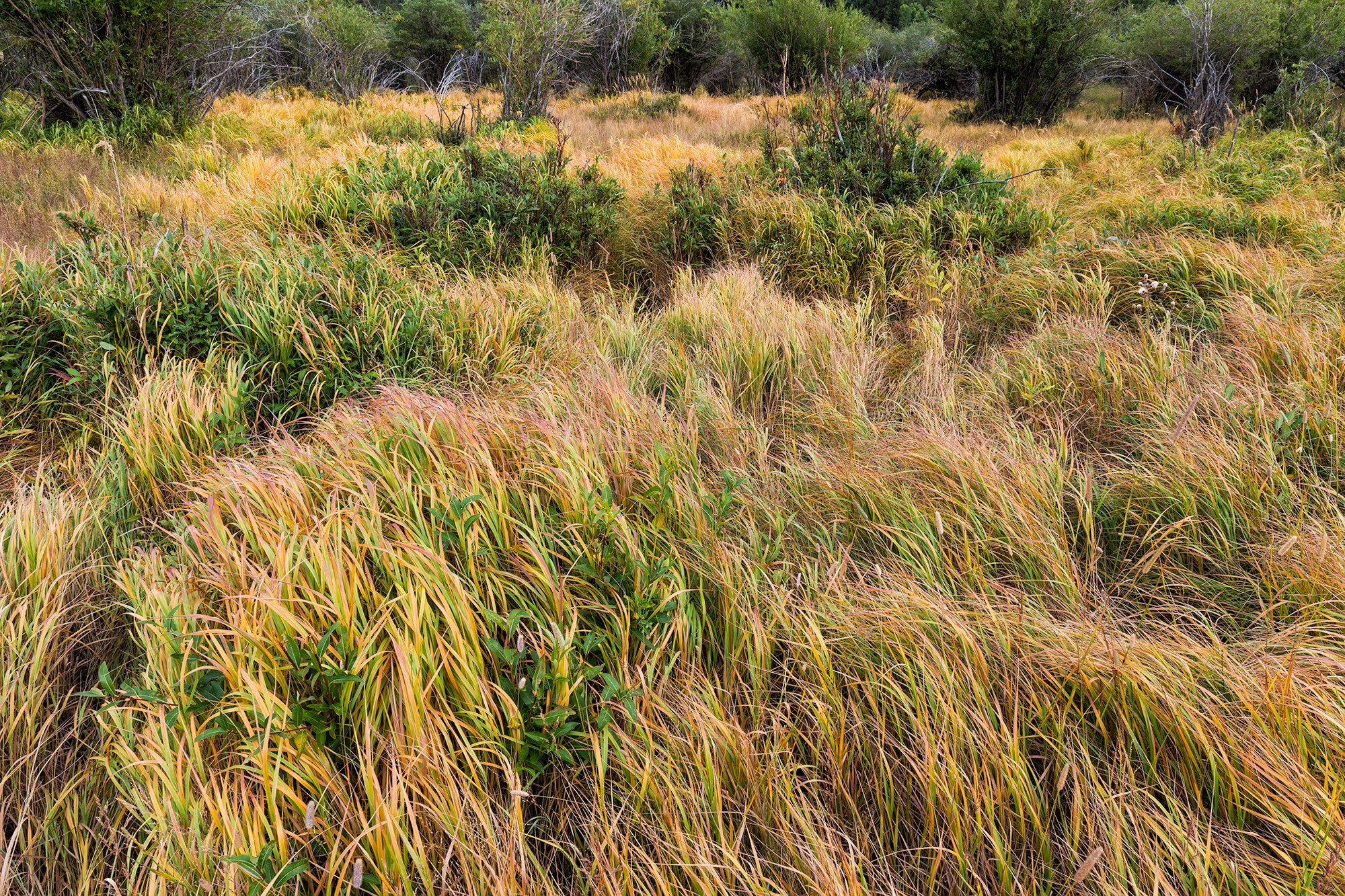 Autumn Grasses, #2. Caribou Ranch Open Space, Colorado, 2016