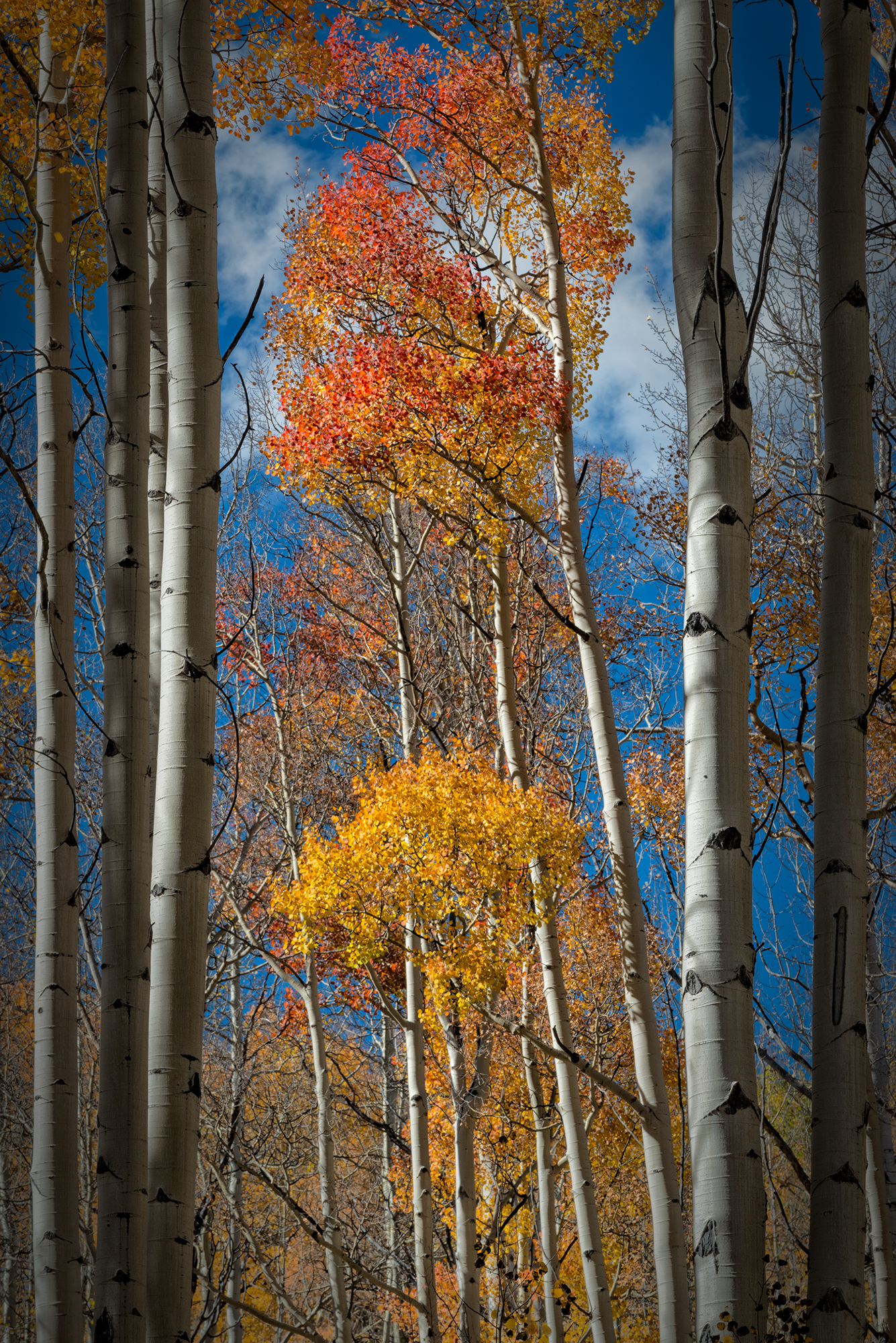 Vertical Color. Meadow Creek Trail, Frisco, Colorado, 2016