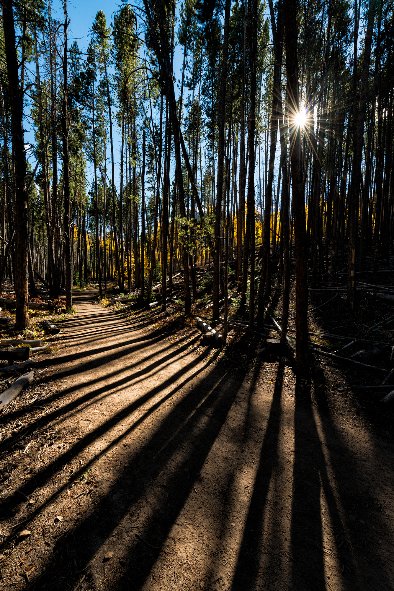 Lines in the Forest. Meadow Creek Trail, Frisco, Colorado, 2016