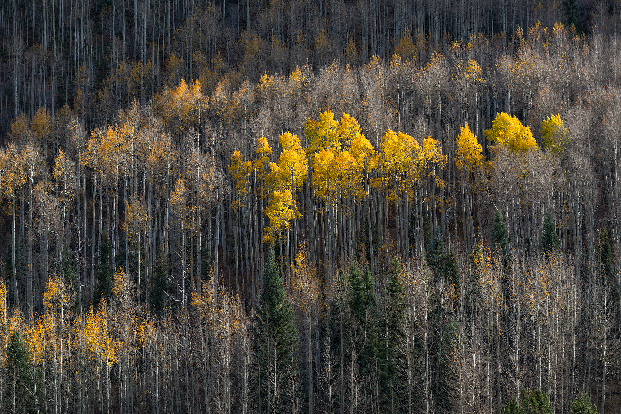 October Aspen, #1. Vail, Colorado, 2016