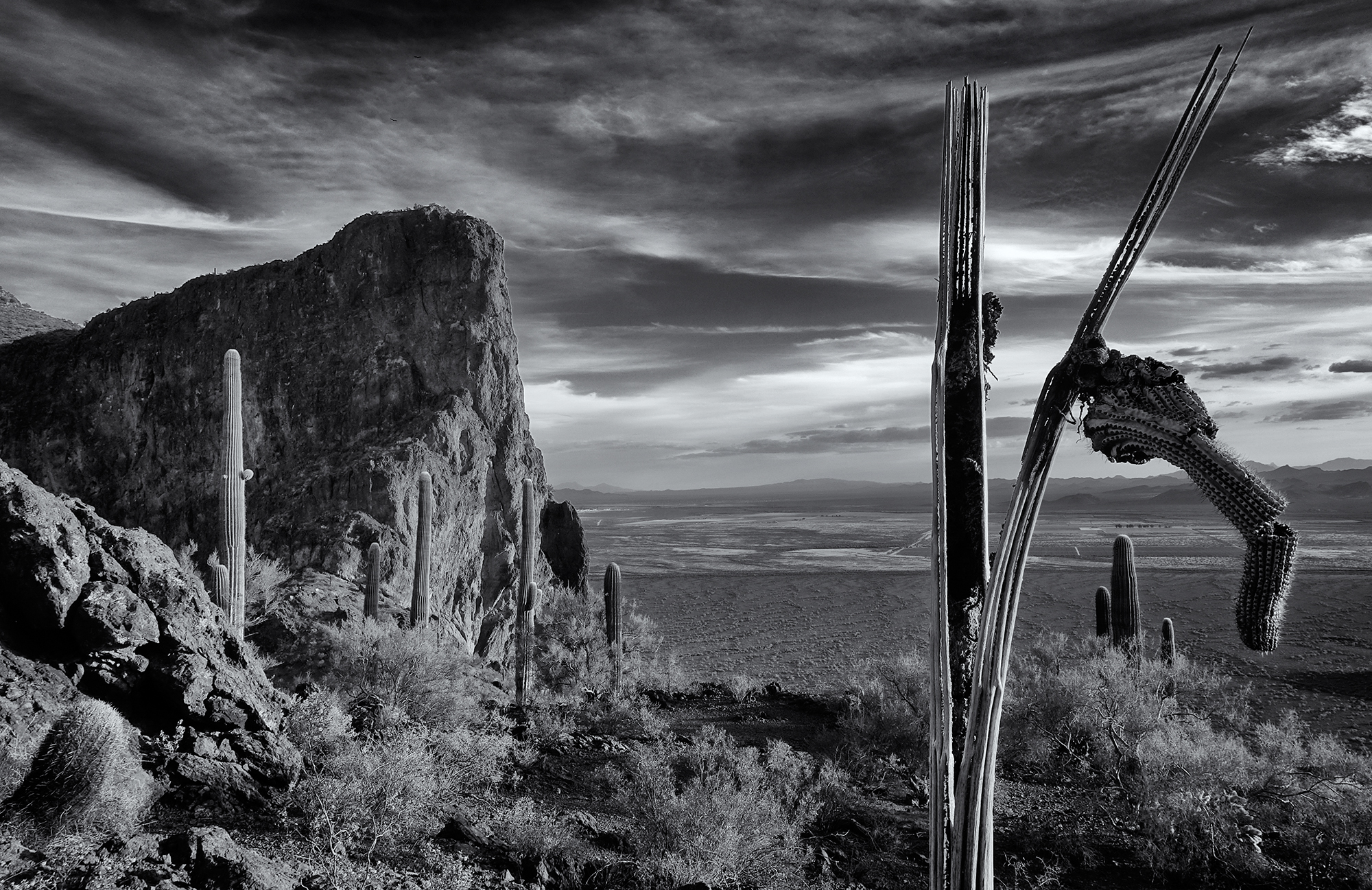 Skeleton View. Picacho Peak State Park, Arizona, 2016