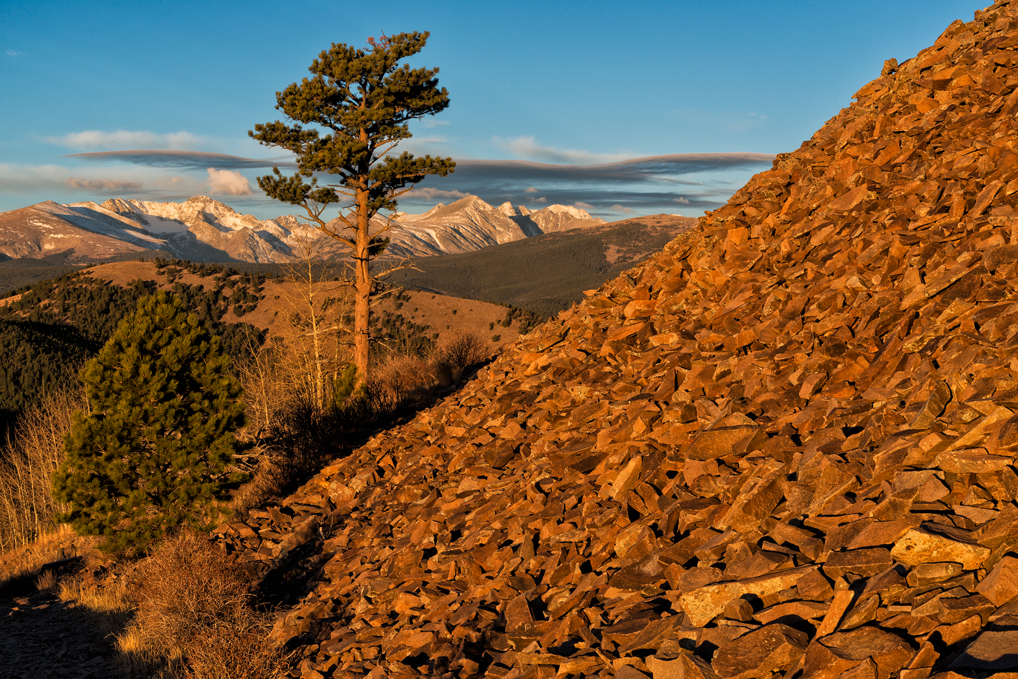 Proud Pine at Sunrise. Sugarloaf Mountain Trail, Colorado, 2016