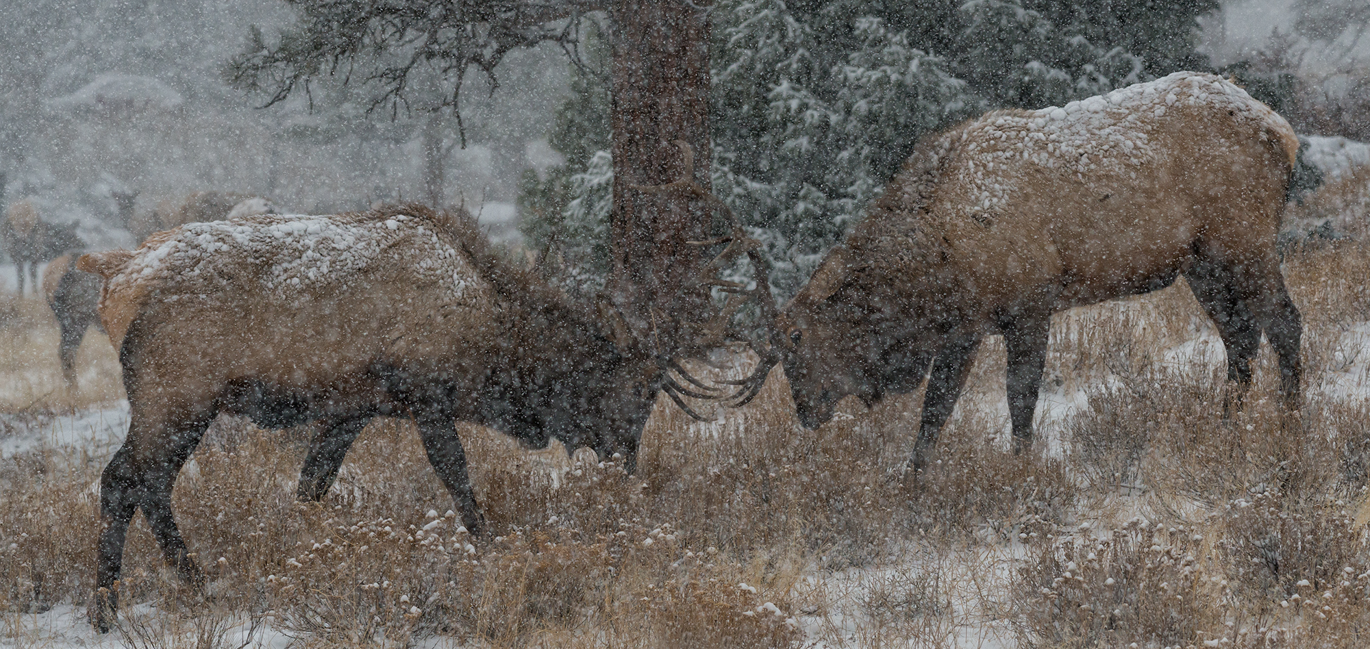 Blizzard Battle. Estes Park, Colorado, 2016