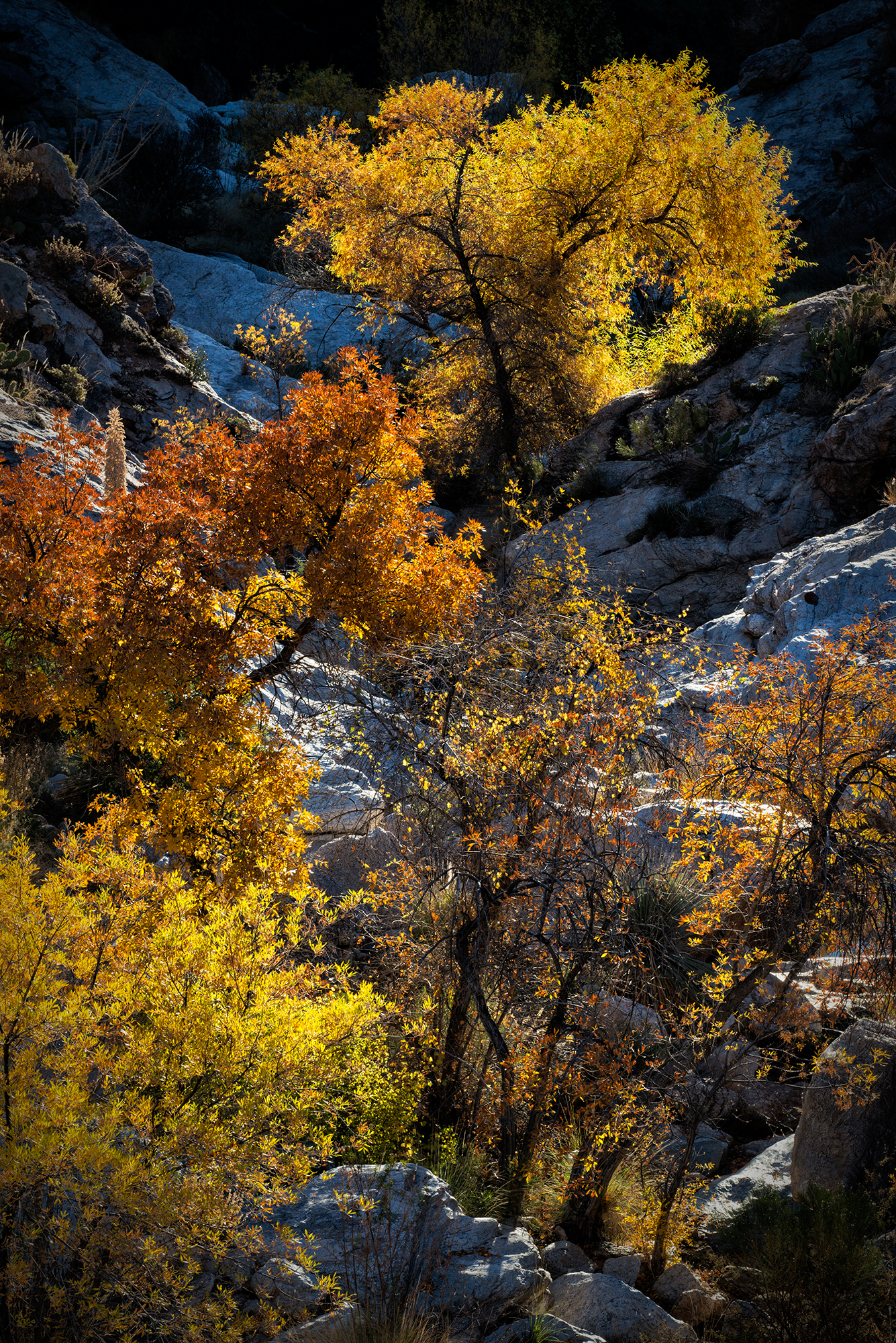 December Color in the Catalinas. Mt Lemmon, Arizona, 2016