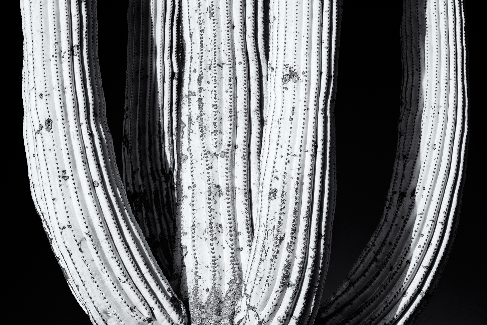 Saguaro, #7. Ironwood Forest National Monument, Arizona, 2016