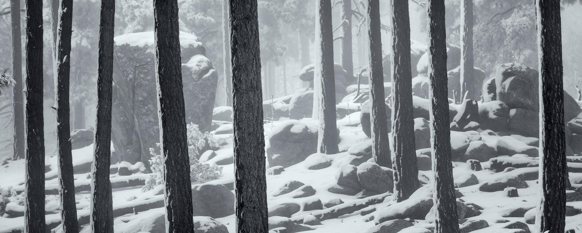 Trees in Fog. Mt Lemmon, Arizona, 2017