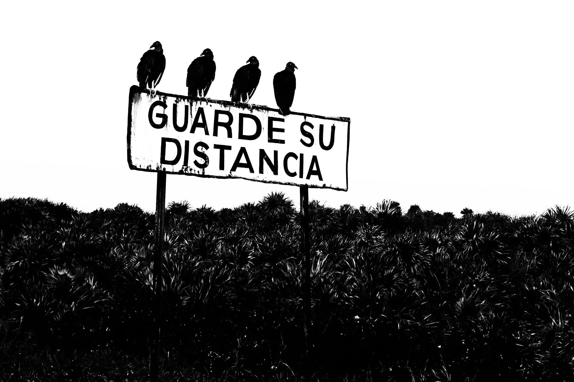 Guarda su distancia. Cozumel, Mexico, 2017