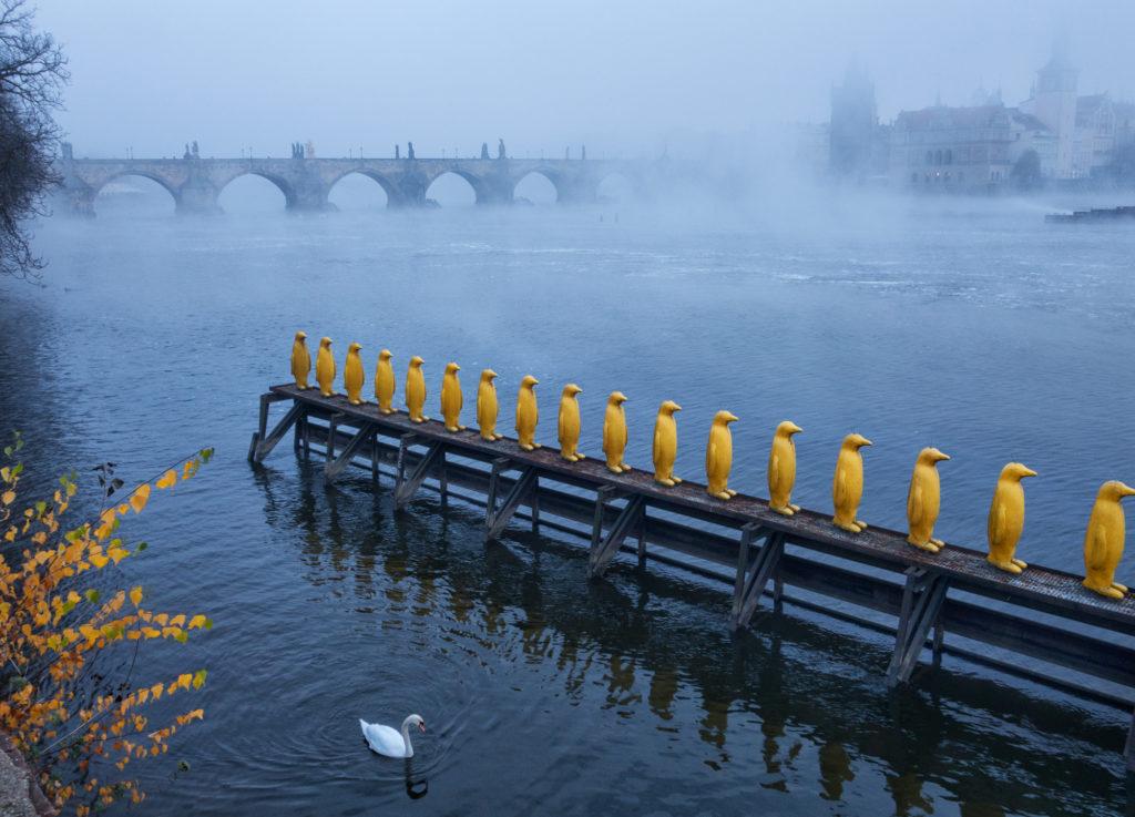 Prague, #21, Charles Bridge and Penguins, Czech Republic, 2017